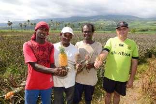 LA REUNION - St-Louis Guy Ethève (à droite) et ses employés montrent un ananas à chaque étape de sa croissance