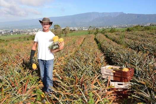 L'ananas Victoria de LA REUNION A la maison de l'ananas, au Tampon, chez Bertrand Bègue