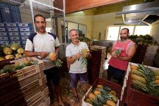 LA REUNION - St-Leu Au centre de tri du Grand Tampon, les ouvriers calibrent, trient et rendent présentables les fruits pour l'expédition.