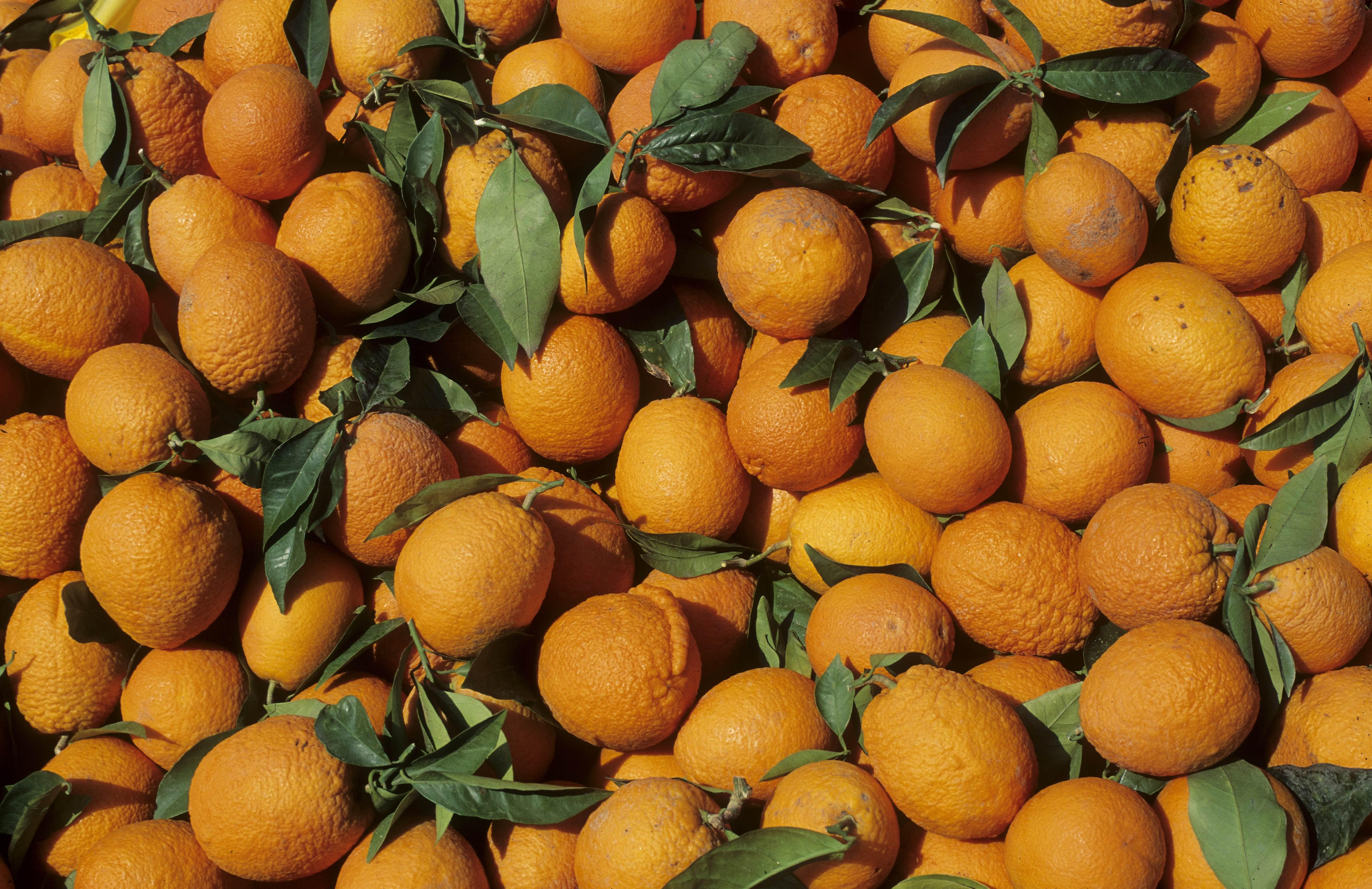 CHYPREPanier d'oranges