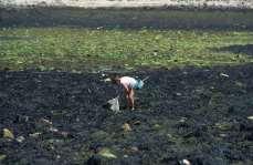 FINISTERE - Ile d'Ouessant Pêche à pieds vers Roc'Hir